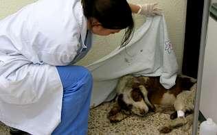 maltrato, animal, salvaje, tortura, mes, Lugo, rof, codina, universidad