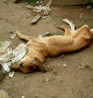 Maltrato animal en Baiona, muerto, perro, tortura