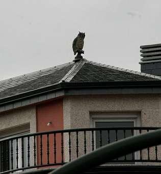 Juegos juguetes y algo m s para espantar palomas u for Plafones de techo y pared