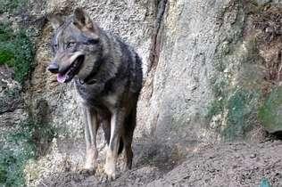 foto animal caza galicia: