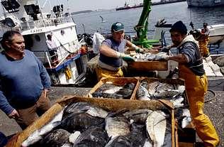 Dos cerqueros descargan en Ribeira doce toneladas de sargo