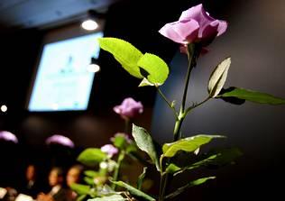 Presentan en Japón la primera rosa azul del mundo