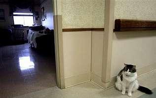 http://media.lavozdegalicia.es/default/2010/02/02/0012_2694918/Foto/g2p31f1.jpg