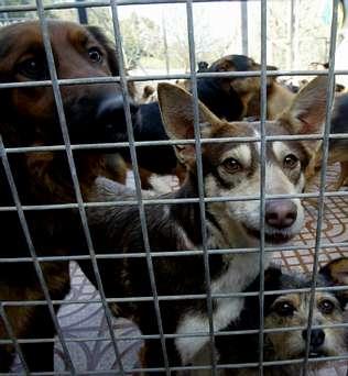 http://media.lavozdegalicia.es/default/2010/05/25/0012_2754292/Foto/v25c11f4.jpg