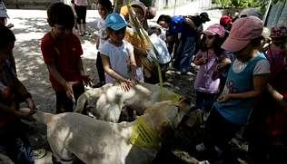 http://media.lavozdegalicia.es/default/2010/06/23/0012_2770948/Foto/o23c10f5.jpg