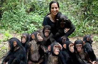 «Estaré en África hasta que devuelva a los chimpancés a la selva»