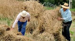 Resultado de imagen de malla trigo