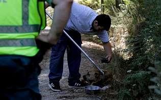 Abandonan cerca de una protectora de animales un perro de raza peligrosa herido