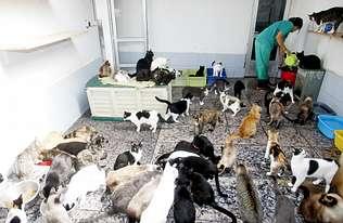 Proyecto Gato desoye al Concello de Vigo y se atrinchera con 500 felinos