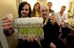 La vid se apunta al cultivo in vitro