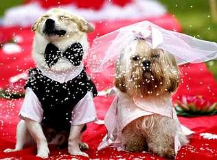 Las bodas caninas empiezan a aparecer en España