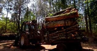 Alarma en Cecebre por una tala  al lado de �El bosque animado�