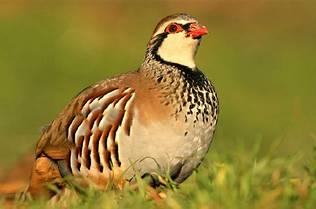 Las aves desarrollan colores más pálidos y más negros por la oxidación