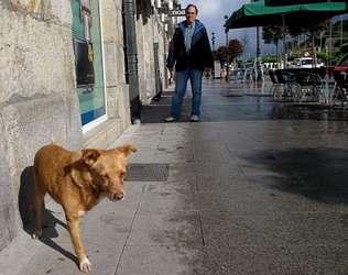 Moneco, el perro fiel de Caíno