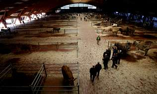 Los ganaderos y los tratantes se niegan a dejar el mercado de Amio