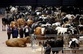 Oroso propone la parcela del 112 como sede del mercado de Amio