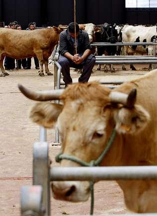 Los hosteleros apoyan el traslado del ganado fuera de la sede de Amio