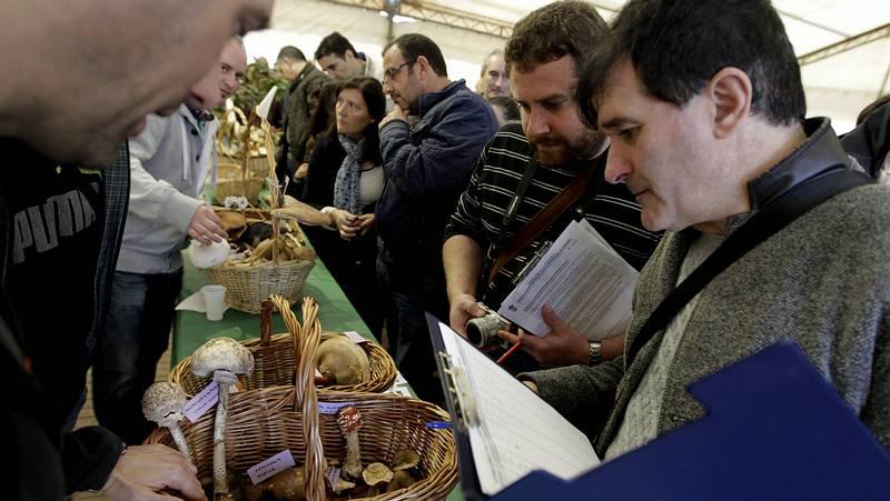 La Feira de Fungos e Cogumelos de As Pontes reúne a 28 ... - La Voz de Galicia