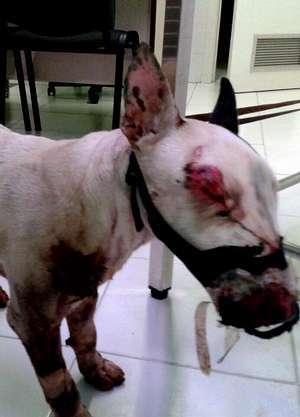 Se cree que el animal fue atado a  un coche y después arrastrado.