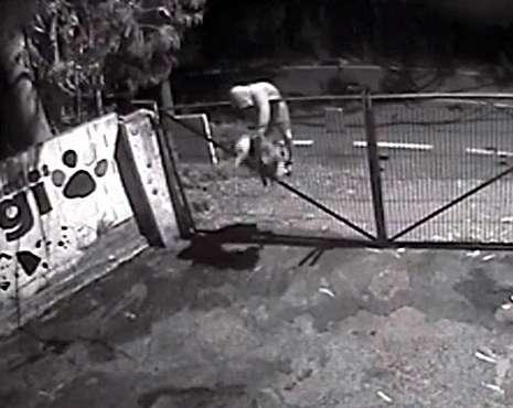 Momento en el que arrojan al animal sobre la verja del refugio