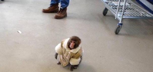 Mono, no es para tanto.