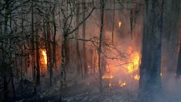 El fuego ha afectado a una de las zonas de mayor riqueza natural de Galicia.