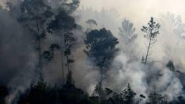 El humo consume los bosques en la comarca del Eume. FOT�GRAFO: Kiko | Efe