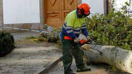El tronco cay� sobre una fachada FOT�GRAFO: CESAR QUIAN