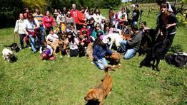 Gracias a los voluntarios todos los perros pudieron salir de paseo. FOT�GRAFO: MARTINA MISER