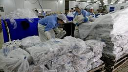 Ya en tierra, la carga pasa a ser procesada por el personal de la factoría FOTÓGRAFO: RAMON LEIRO