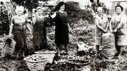 Recolecci�n de patatas en Burela, sin datar. FOT�GRAFO: Cedida. Asociaci�n de Veci�os Casas Baratas de Burela.