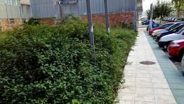 La maleza invade este solar abandonado en el barrio de O Pi�eiri�o FOT�GRAFO: ANTONIO GARRIDO