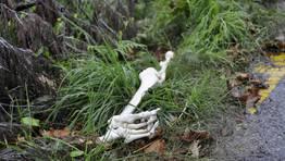 The Walking Dead ha vuelto. Y se pasean por las inmediaciones del Instituto Castro Alobre FOT�GRAFO: Nacho Feijoo