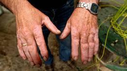 Estas manos tardan hora y media en hacer un cesto de vimbios FOT�GRAFO: MARTINA MISER
