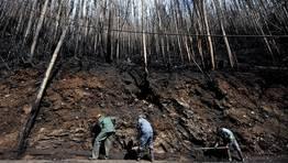 Catástrofe medioambiental en las Fragas do Eume a causa de un devastador incendio. En la imagen, varios operarios limpian y colocan barreras textiles biodegradables para impedir que llegue la ceniza al río Eume. FOTÓGRAFO: ANGEL MANSO