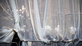 Una cortina para proteger a la secci�n femenina durante una boda en Israel. FOT�GRAFO: ABIR SULTAN | EFE