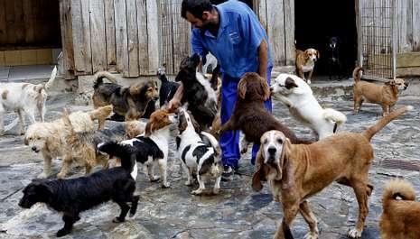 Perros de casa perros de caza abandonados abarrotan las - Cazar ratones en casa ...
